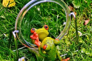 frog mirror